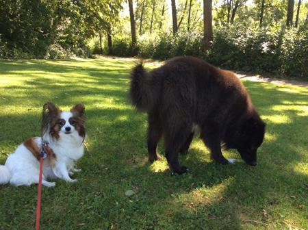 花と大きな犬