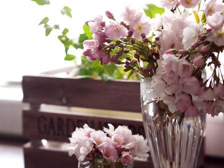 桜の花のある風景